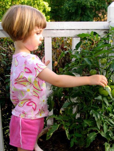 Flicka och tomatplanta