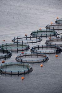 Fiske, kasseodling, vattenbruk, akvakultur